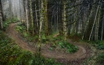 A muddy offroad trail
